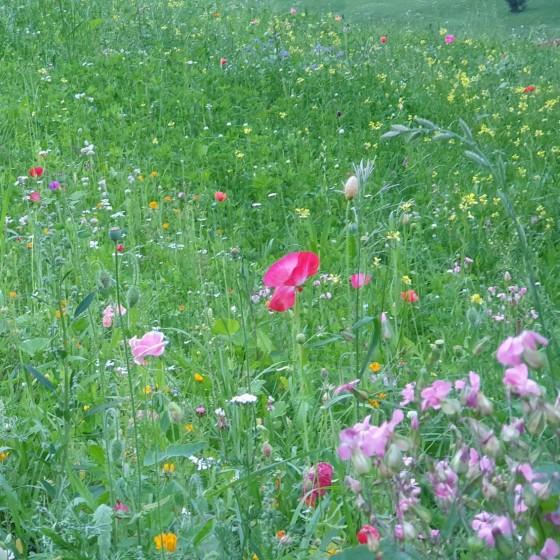 Wildflower - miscuglio di...